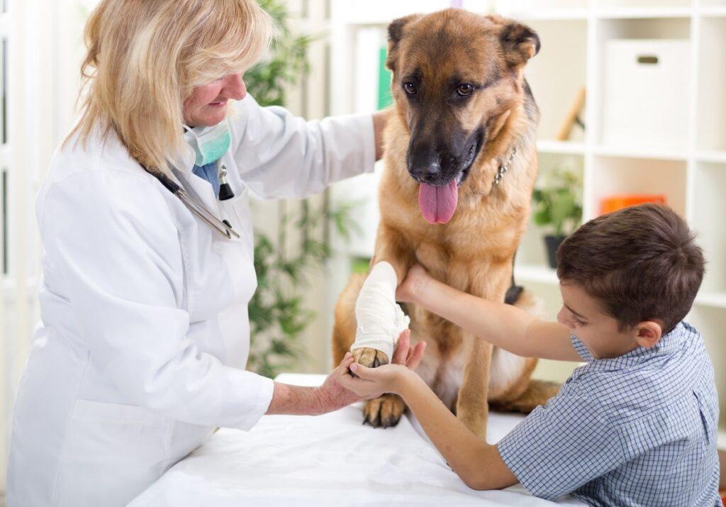 pet urgent care